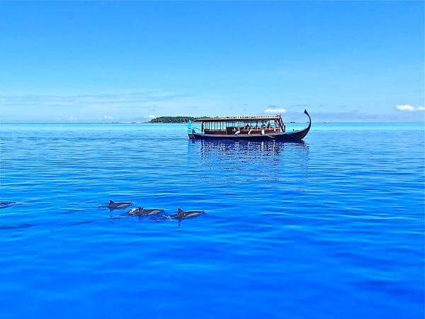 Les dauphins des Maldives