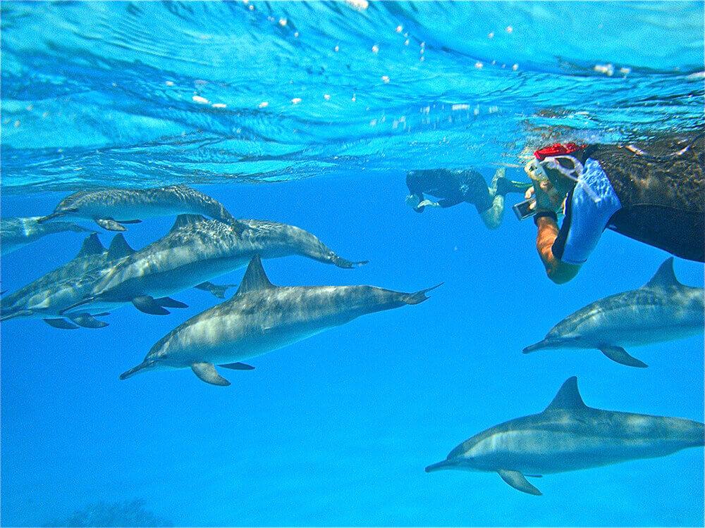 Snorkelingavec des dauphins