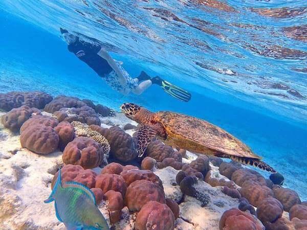 une personne nage avec une tortue dans un lagon