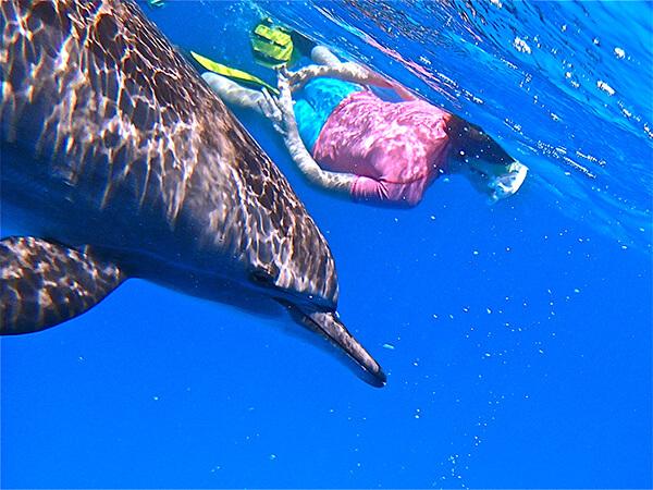 une personne nage avec un dauphin